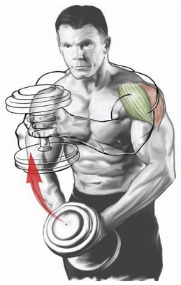 Single Dumbbell Front Raise