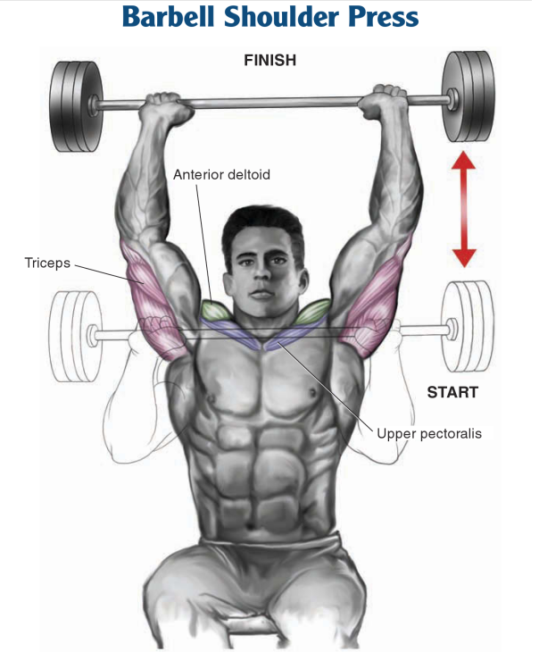 Seated Barbell Shoulder Press Vs Standing
