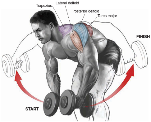 bent-over dumbbell raise