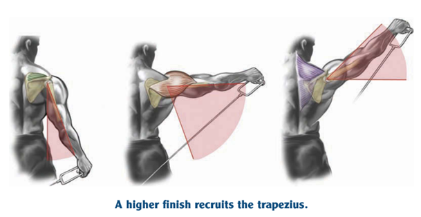 higher finish recruits the trapezius