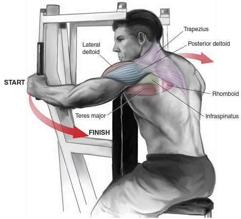 machine rear deltoid fly