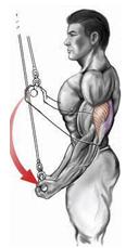 reverse-grip pushdown
