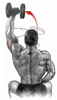 single- dumbbell seated triceps press