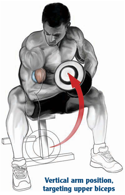 vertical arm position tergeting upper biceps