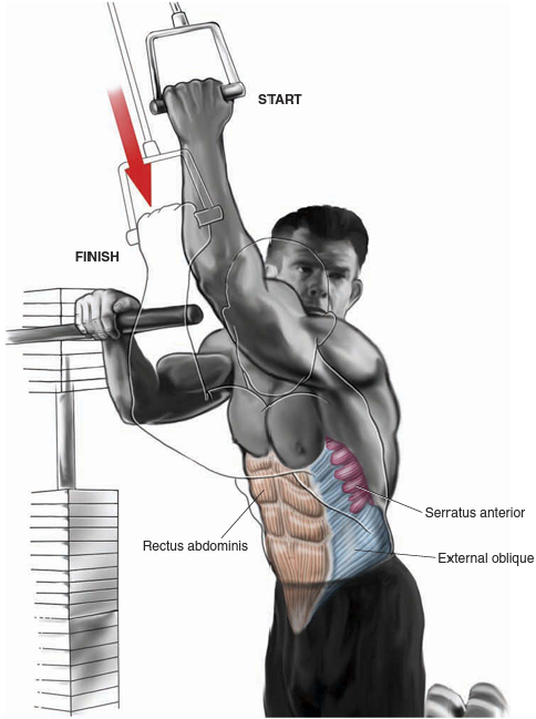 Cable Oblique Crunch