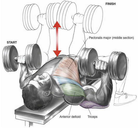 Single Arm Dumbell Bench Press: Bo-dy.com