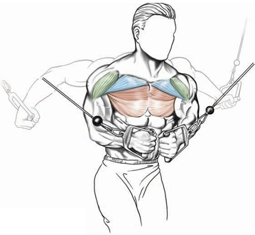high trajectory targets midsection muscle