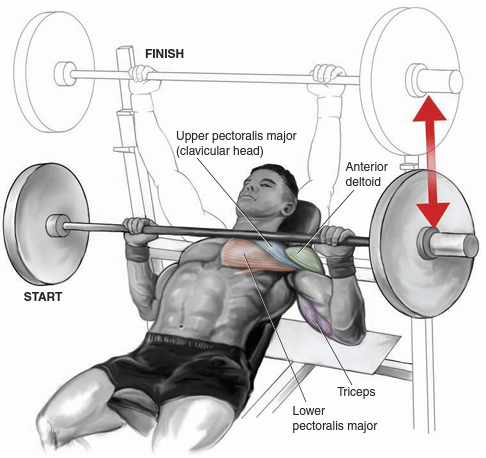 Cool Bench Press Muscles Worked Eccentrically Working The Arm Ibusinesslaw Wood Chair Design Ideas Ibusinesslaworg