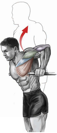tilting forward targets the pectorals